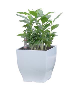 Samozavlažovací květináč G21 Cube mini bílý 13.5 cm